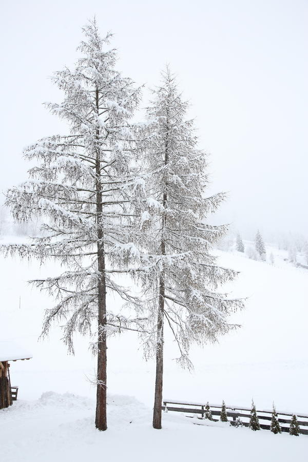 Free Snow Covered Trees In Countryside Stock Photos - 37383403