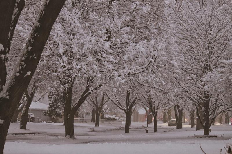 Snowy day on treelined suburban street. Snow covered trees and land in small suburban Midwestern town of Villa Park, Illinois stock photo