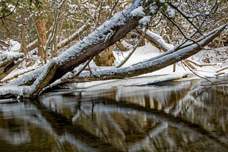 Snow Covered Trees Lean Over An Ontario River stock image