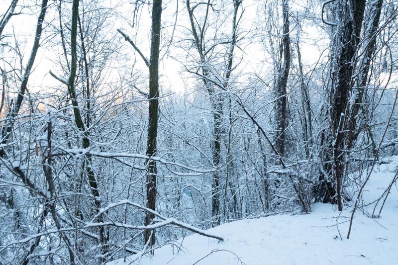 Snow covered trees in the park stock image