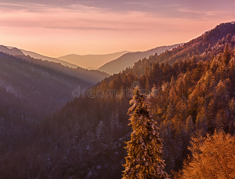 Download Snow Covered Trees At Sunset In Smoky Mountains Stock Photo - Image: 18809370