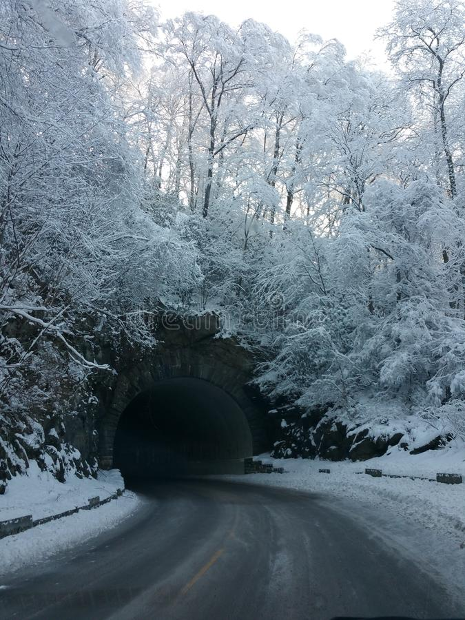 Snow covered trees and tunnel stock image