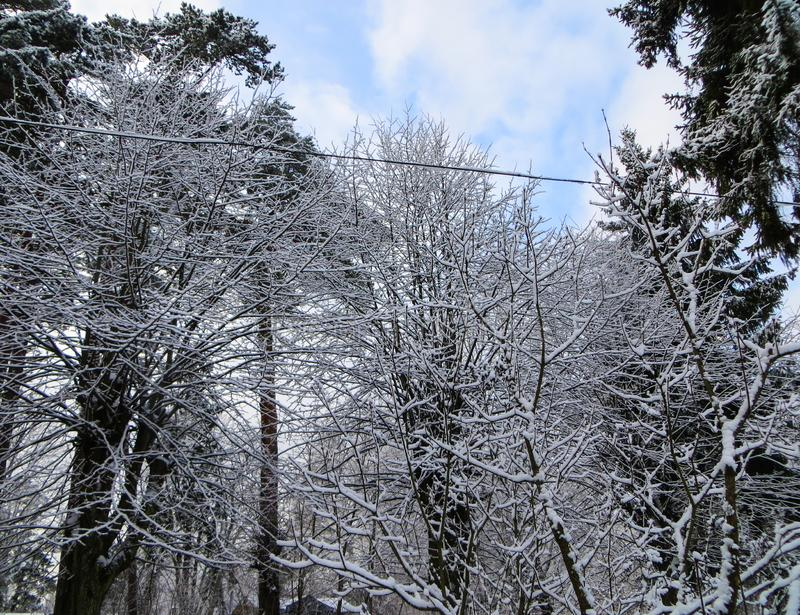 Snow covered trees in the winter forest.  royalty free stock photos