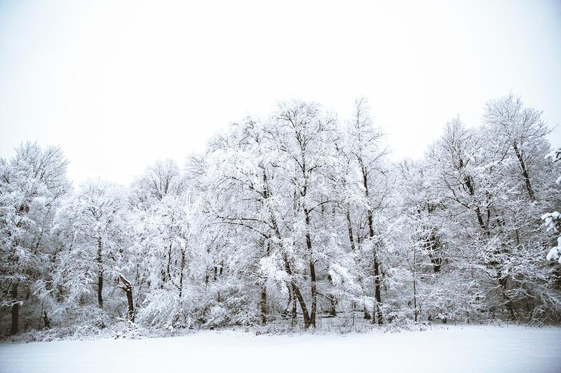 Snow Covered Trees in Winter - Snowy Landscape. Wintry landscape covered in snow. Lots of trees. Winter wonderland. Mirror on water. Marshmallow world stock photos