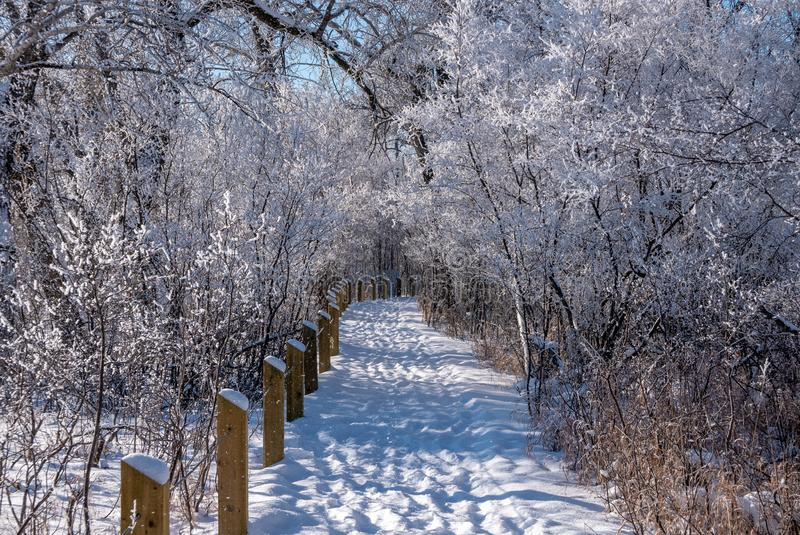 A snow covered walking trail in the woods in the Inglewood bird sanctuary stock images