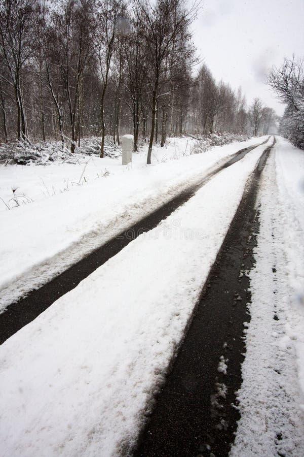 Snow-covered weg door het bos stock foto's