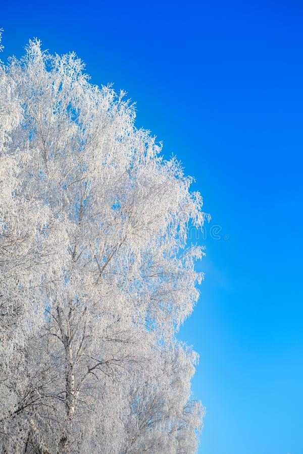 Snow covered winter birch tree tops blue sky. Winter landscape. Snow covered winter birch tree tops blue sky stock images