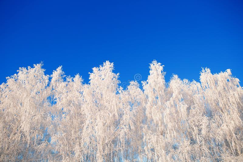 Snow covered winter birch tree tops blue sky. Winter landscape royalty free stock photography