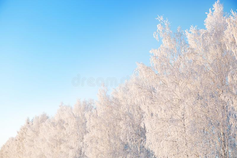 Snow covered winter birch tree tops blue sky. Winter landscape royalty free stock photos