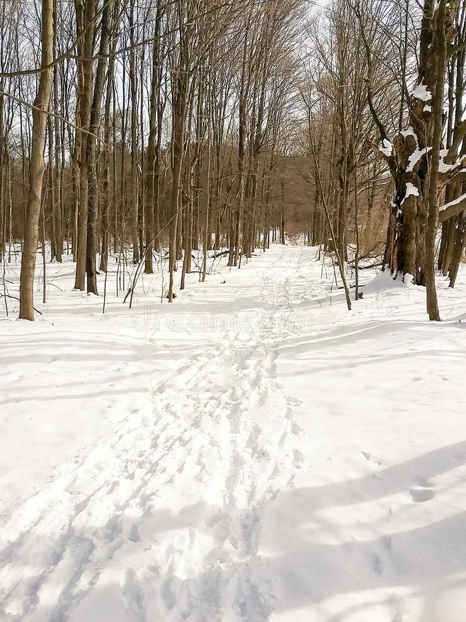 Snow covered winter hiking, snowshoe, ski trail royalty free stock image