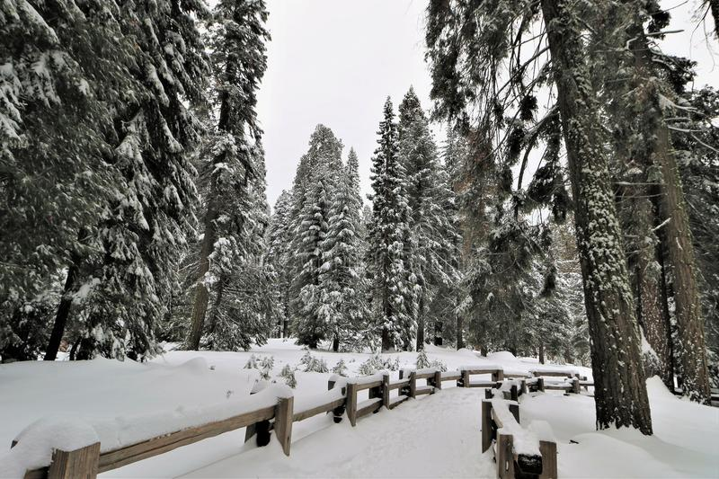 Snow covered wood fence lined walkway in Sequoia National Park California. stock photos