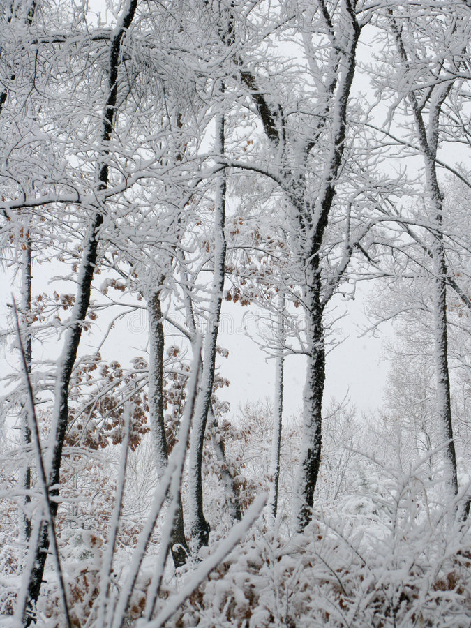 Snow-covered woods stock image