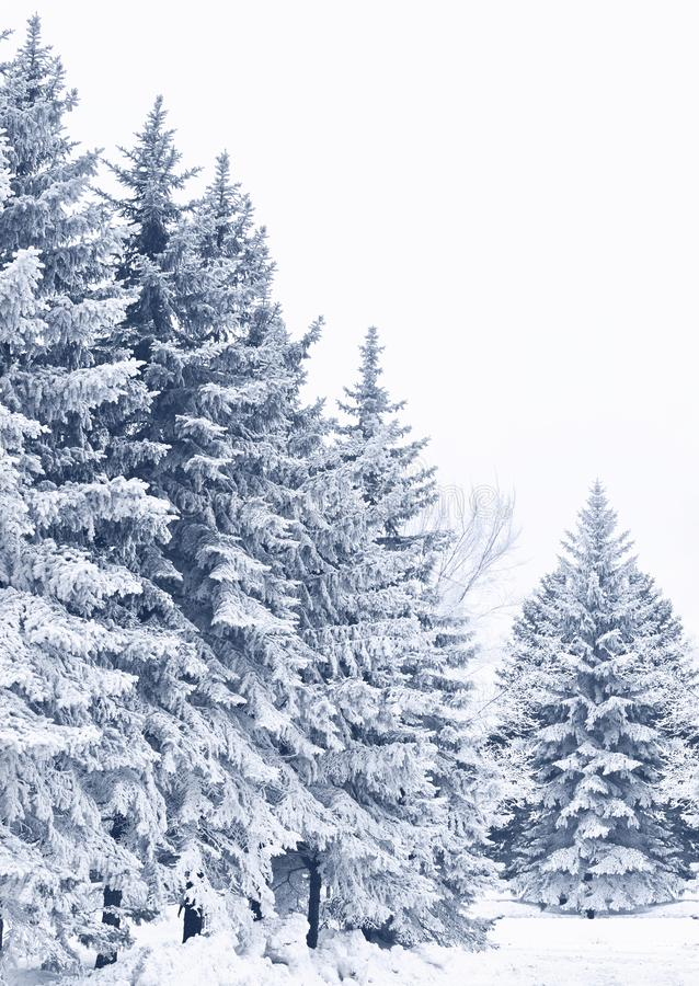 Snow-covered woods stock photography