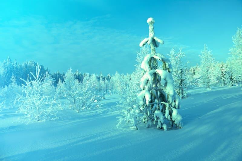 Snow-covered Zweige der Bäume stockbilder