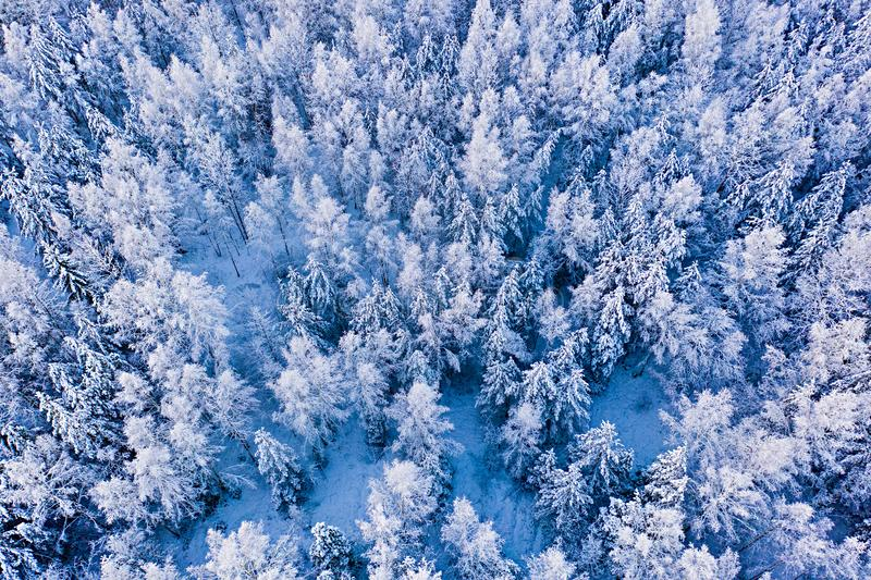 Snow covers high trees in mixed forest, winter landscape. Cold weather concept. Magic moment in woods. Snow covers high trees in a mixed forest, winter landscape stock photography