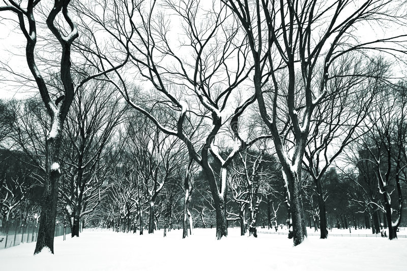 Snow day at Central Park stock photography