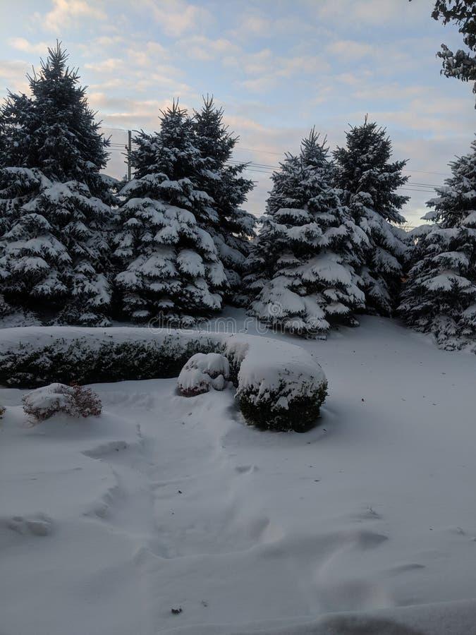 Snow Days Outside Trees royalty free stock photos