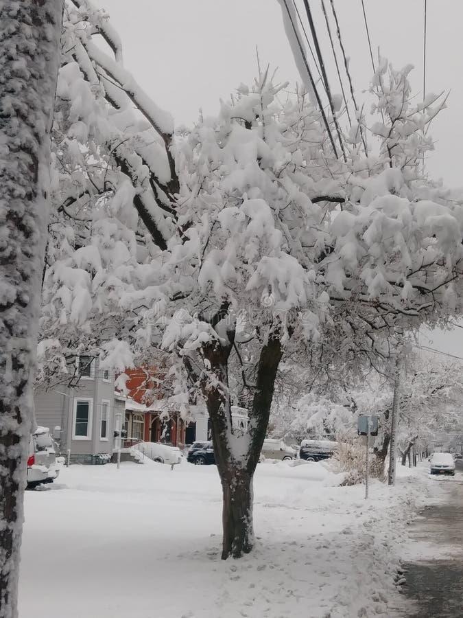 Snow Days. Snowstorm, trees, winter, winterstorm stock image