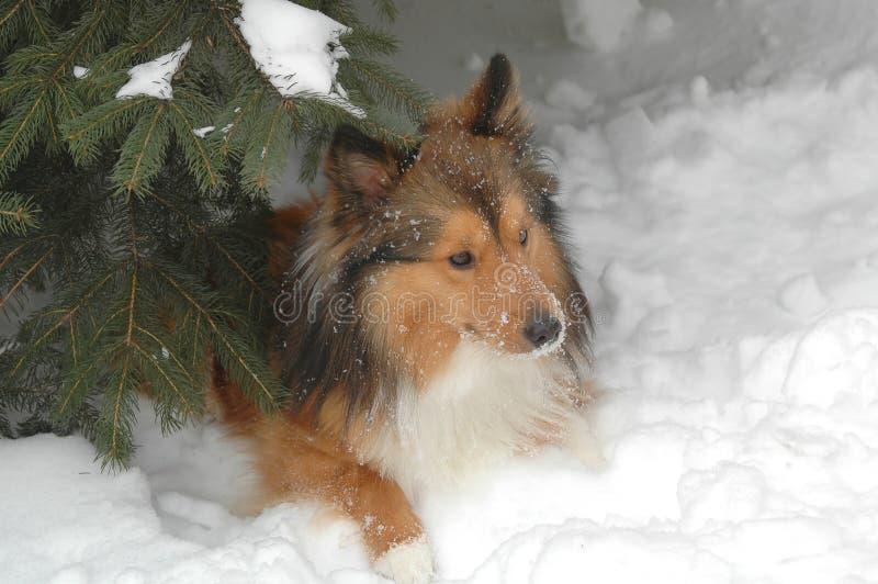 Download Snow dog 7 stock photo. Image of hound, full, horizontal - 409632