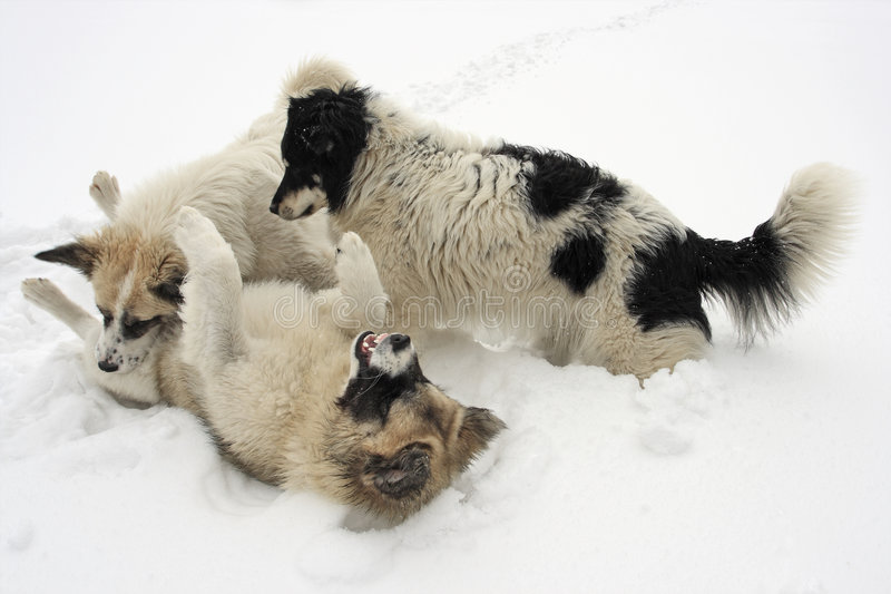 Download Snow dog stock image. Image of adorable, sitting, snow - 8544757