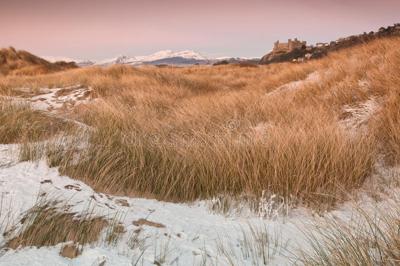 Snow on the dunes royalty free stock image