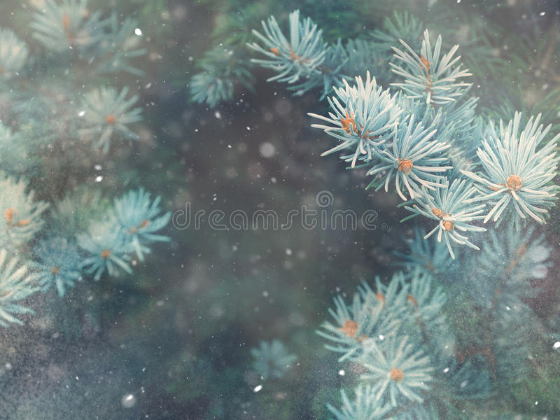 Snow fall in winter forest. Christmas magic royalty free stock image