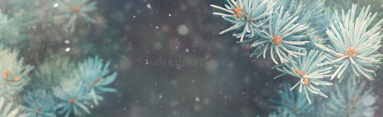 Snow fall in winter forest. Christmas nature magic banner stock photography