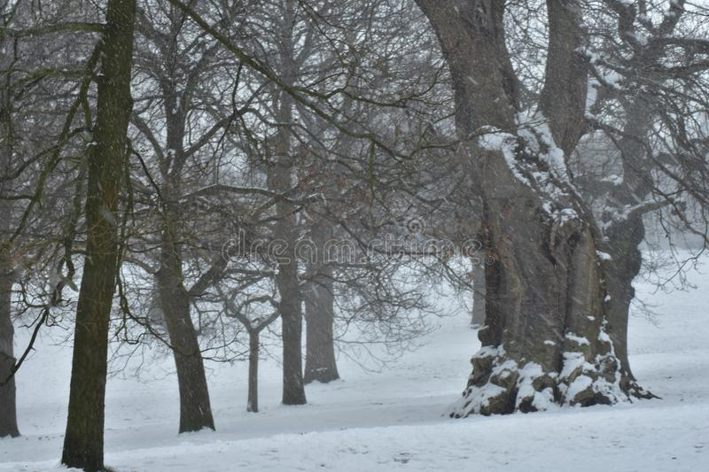 A winter wonderland in the fields royalty free stock images