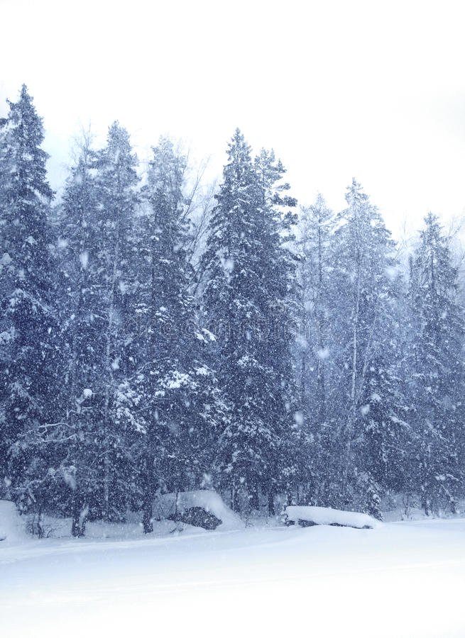 Download Snow falling forest stock image. Image of snowfall, cool - 13317909