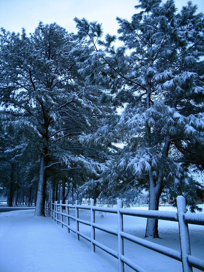 Download Snow Fence stock image. Image of fence, landscape, tree - 78773
