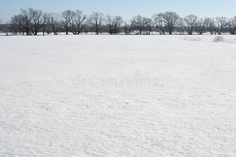 Download Snow field stock image. Image of landscape, nature, trees - 523569
