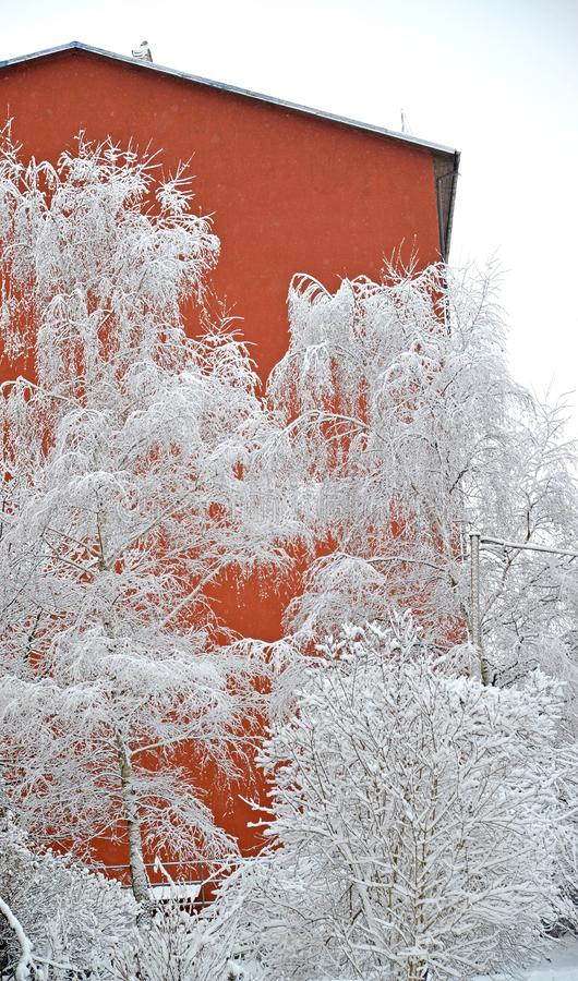 Snow-filled trees against the background of the bright wall of the building. Winter royalty free stock photography