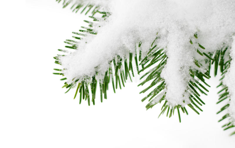 Snow on a fir tree branch stock photography
