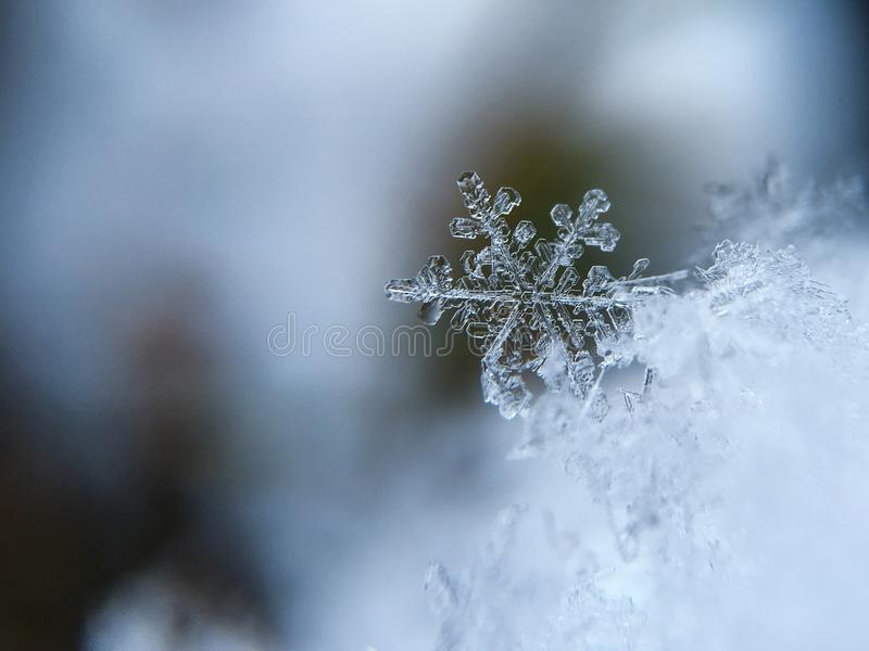 Snow Flakes Macro Photography Free Public Domain Cc0 Image
