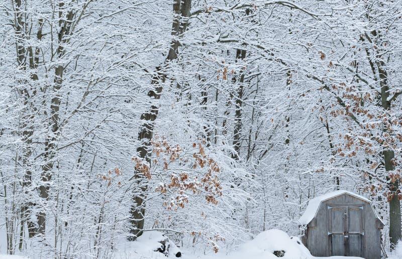 Snow flockats skog och skjul arkivfoton