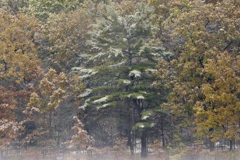 Snow Flocked Autumn Shoreline Hall Lake. Foggy autumn landscape of the shoreline of Hall Lake flocked with snow Yankee Springs State Park, Michigan, USA royalty free stock image