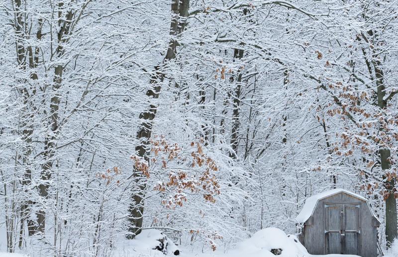 Snow Flocked Forest And Shed Stock Photos