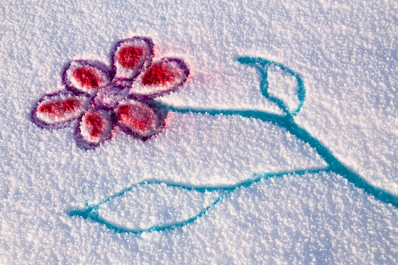 Snow flower royalty free stock images