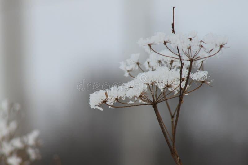 Snow flower stock photos