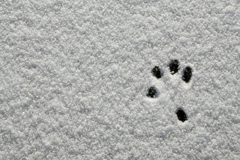 Snow Footprint royalty free stock image