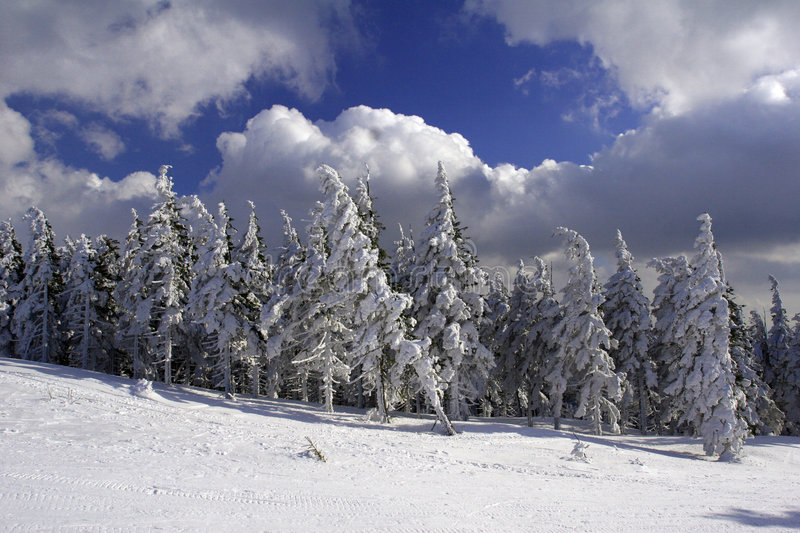 Download Snow and forest stock photo. Image of ridge, cloud, mountains - 2300382