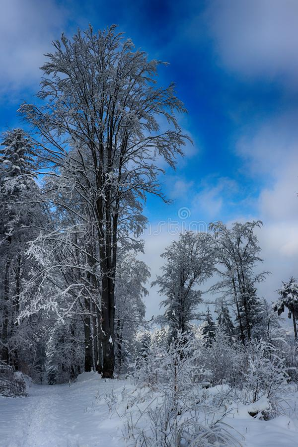 Snow in the forest stock photos