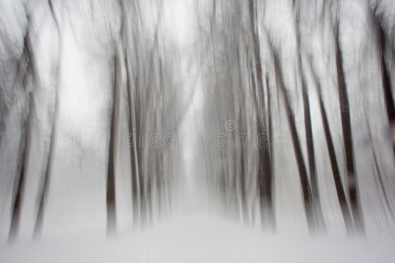 Snow forest textures in black and white stock photo