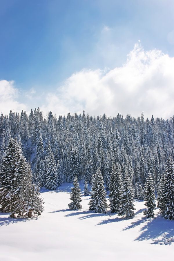 Download Snow Forests In The Mountain Royalty Free Stock Photography - Image: 5036857