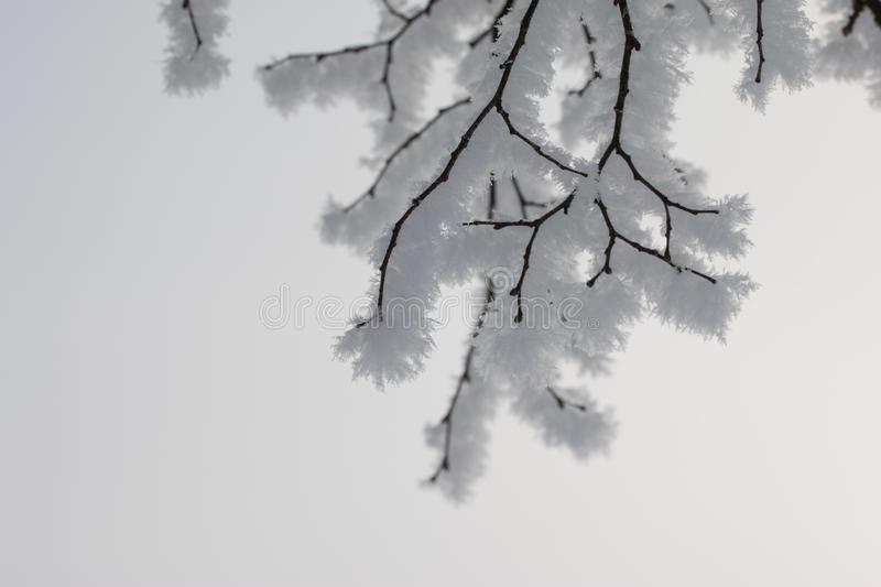 Beautiful winter landscape: Frosty trees in January, Austria. Postcard. Snow and frost covered trees in January. Winter in Austria, frosty, beautiful, landscape royalty free stock photography