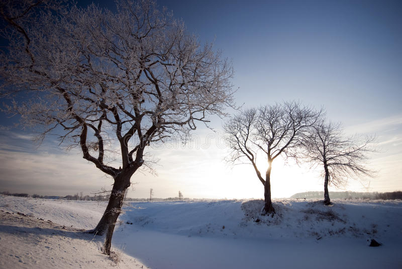 Snow, frost and sun royalty free stock images