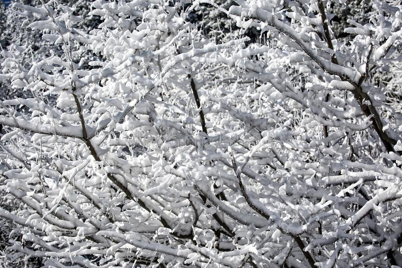 Snow and frost in the trees. Snow and frost on the trees in the mountain forest royalty free stock photo