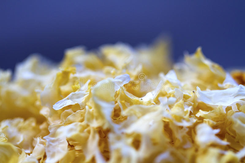 Snow fungus, traditional chinese herbal medicine royalty free stock image