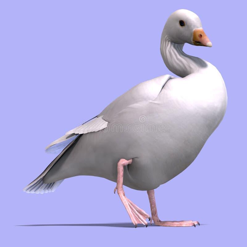 Download Snow Goose Royalty Free Stock Image - Image: 10524876