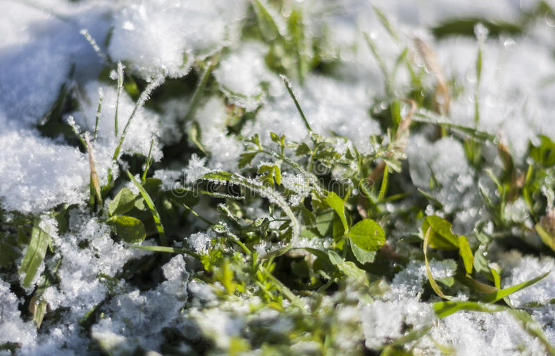 Snow on the grass royalty free stock photo